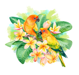 Sun Conure. Parrot Sun Parakeet. Birds sitting in Frangipani, Plumeria flowers isolated on white background. A green parrot. Illustration. Watercolor. Template Close-up. Clip art.