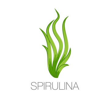 Spirulina algae icon on white
