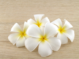 closeup group of blooming pure white plumeria or frangipani flower head on brown wood plank table...