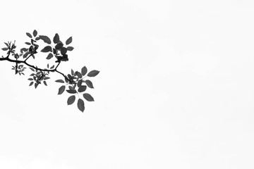beautiful tree branch and leaf isolated on pale white background