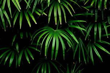 green palm leaves patterns in rain forest - light and shadow
