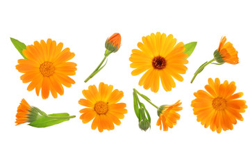Calendula. Marigold flower isolated on white background with copy space for your text. Top view. Flat lay pattern