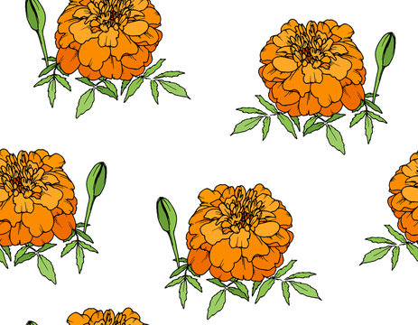 Tagetes or Marigold flower, Mexican Day of the dead, seamless pattern on transparent background