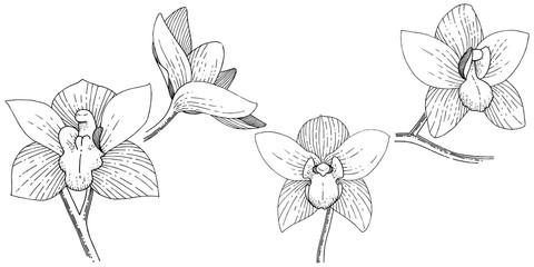 Orchids in a vector style isolated. Full name of the plant: orchid. Vector flower for background, texture, wrapper pattern, frame or border.