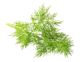 Fresh dill isolated on background