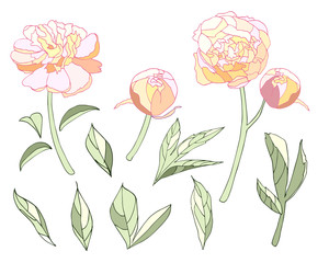 Tender light colors Peony elements set