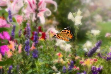 Schmetterling 512