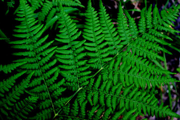 Bright summer green background, forest fern branch close-upn