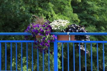 Blumen am Geländer im Topf