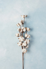 Flat lay of feminine light blue background with branch of artificial cotton flower. Can be greeting card and design element. Top view, copy space.