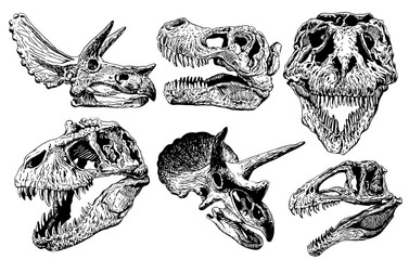Graphical set of dinosaur skulls isolated on white background,vector sketchy illustration for tattoo