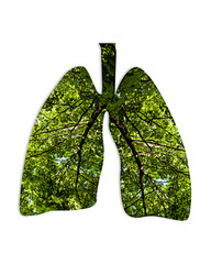 Conceptual image of human lungs