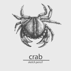 Crab. A marine resident. Sketch style. Vector
