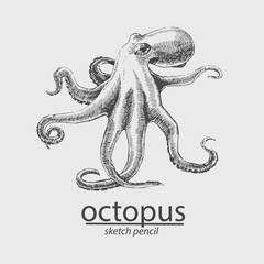 Octopus. A marine resident. Sketch style. Vector