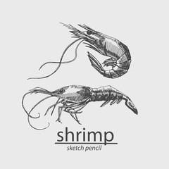 Shrimp. A marine resident. Sketch style. Vector