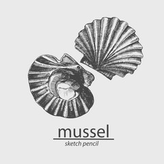Sea mussel. A marine resident. Sketch. Vector