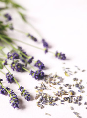 Dried and fresh lavender flowers on pink background