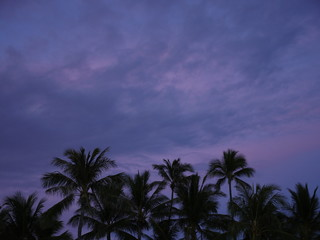 palm tree silhouette under purple pink tropical sunset sky