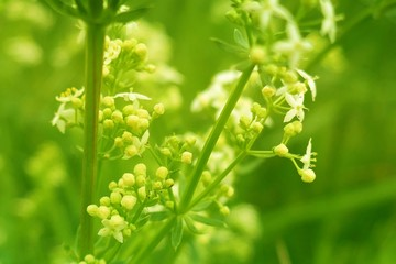 Wildflowers and grass background.bright green field grass in the sun .   Wildflowers background .soft focus. Summer herbal background