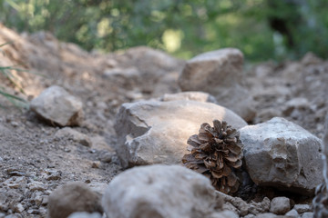 pinecone with rocks
