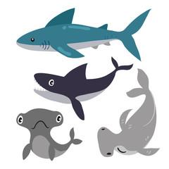 shark vector collection design