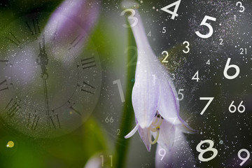 Nature, time and numerology