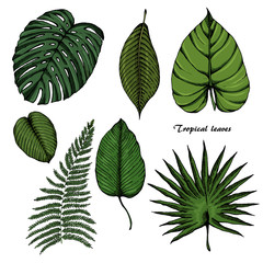 Tropical leaves sketches set 3