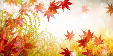 稲 米 紅葉 背景
