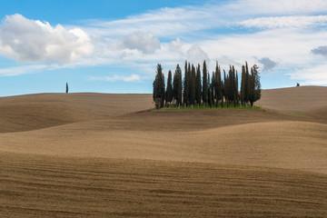 Cypress trees near San Quirico d'Orcia, Italy
