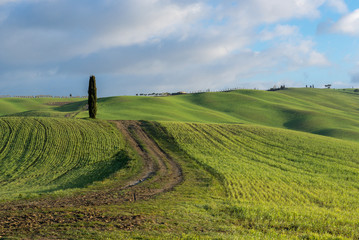 Green rolling hills near San Quirico d'Orcia, Tuscany, Italy