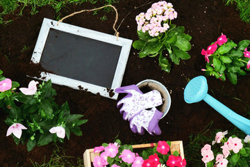 close up of flowers in a garden, farmer tools and a black board. Concept: Nature, farm, planting