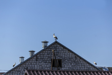 Three stork on top of the roof of the barn. A hot summer day. Site about nature, birds, animals, ecology.