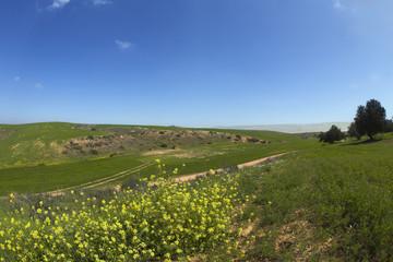 Soil rural  lane through a spring field