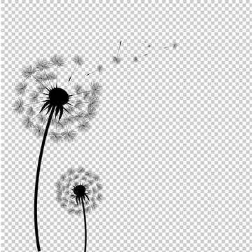 Silhouette Dandelion Isolated Transparent Background