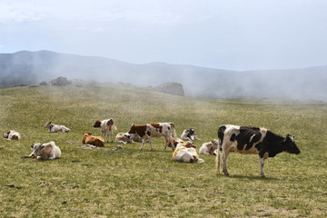 a herd of cows in the fog