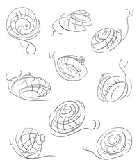 Snails set. Abstract decorative design elements. Isolated objects on white background. Vector illustration