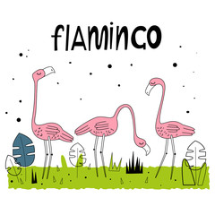 Vector illustration of Flamingos. Nice background. Hand drawn letters style. Cartoon-style. Scandinavian motives..