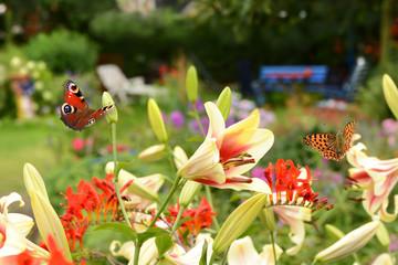 Schmetterling 524