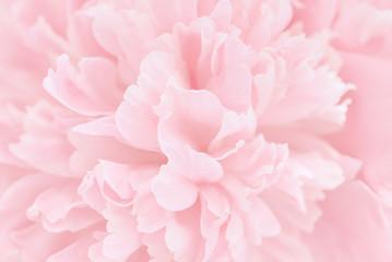 Pink petals with blurred focus