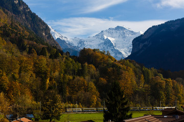 Wall Mural - train and snowy mountain on meadow at Jungfrau region in Switzerland