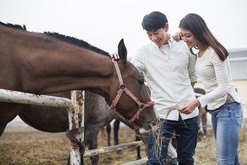 Young Chinese couple feeding horse