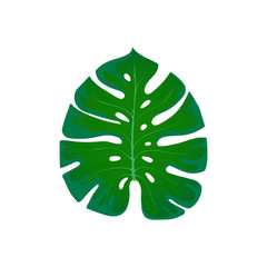 Foliage monstera. Trend element of the palm leaf design on a white. Tropical exotic and plants