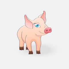 Funny pig isolated on a light gray background
