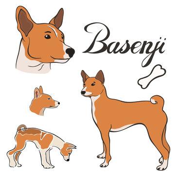 Basenji dog breed vector illustration set isolated. Doggy image in minimal style, flat icon. Simple emblem design for pet shop, zoo ads, label design animal food package element. Gun dog sign.