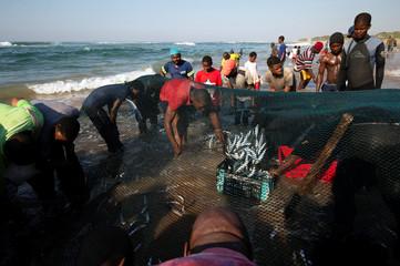 Fishermen empty a net of sardines in Umgababa
