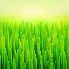 Stock vector illustration realistic macro grass. Summer and spring background. eps10