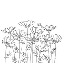 Vector bouquet with outline Cosmos or Cosmea flower bunch, ornate leaf and bud in black isolated on white background. Contour blooming Cosmos plant for summer design and coloring book.