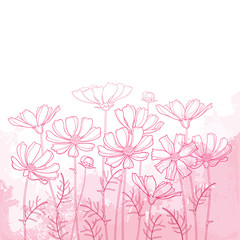 Vector bouquet with outline Cosmos or Cosmea flower bunch, ornate leaf and bud in pastel pink on the textured pink background. Contour blooming Cosmos plant for elegance summer design.