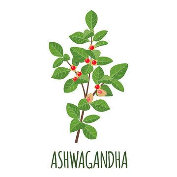 Ashwagandha icon in flat style on white background