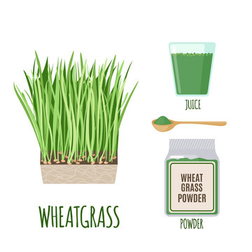 Wheatgrass set with powder and green juice in flat style isolated on white.